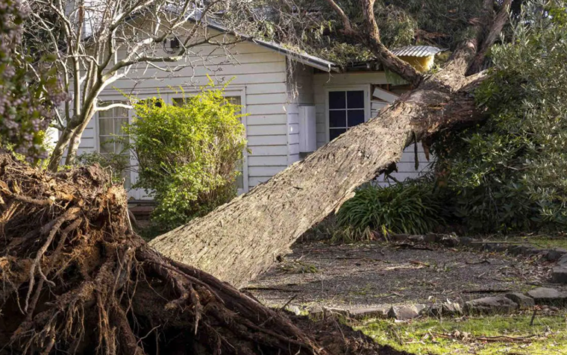 Damage caused by heavy rains in Melbourne. Information that it will take three weeks for electricity to be available in most areas